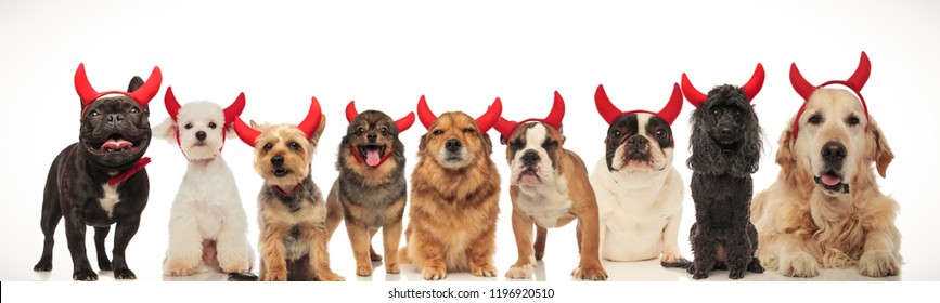 happy group of dogs celebrating halloween, collage image