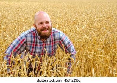 Happy hairless farmer with beard in ripe wheat field near ears of wheat