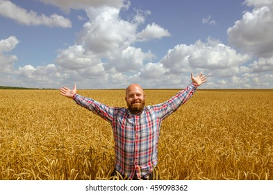 Happy hairless farmer with beard in ripe wheat field with handsup to a blue sky. great harvest