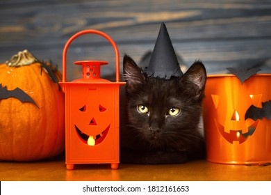 Happy Halloween. Black evil cat and pumpkin,  jack o lantern pail and bats on dark wooden background. Black emotional kitten posing at holidays decorations, celebrating halloween at home