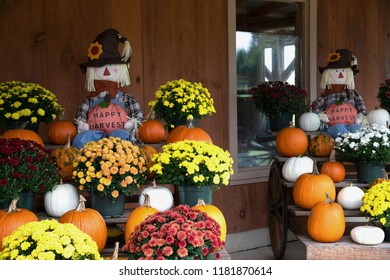 Happy Harvest With Flowers and Pumpkins