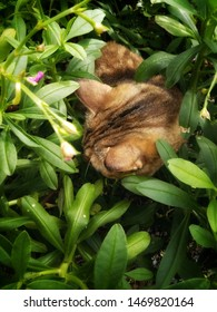 Happy & healthy Cat in the garden concept. Top view of cute kitten hiding to hunt among tropical summer green garden with fresh flower foliage & leaves in nature outdoor morning sunlight, copy space