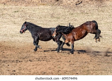 happy horse running and kicking in spring time