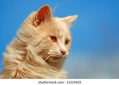 Happy House Cat