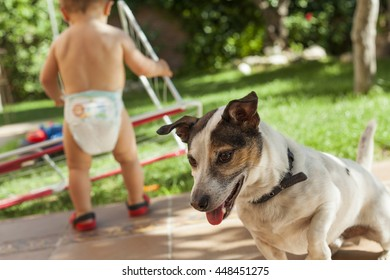 Happy Jack Russell terrier playing with kids in the garden.