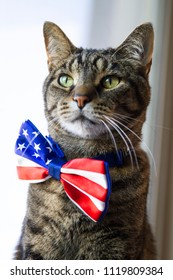 Happy July 4th conceptual image with American Tabby cat wearing Patriotic bow tie