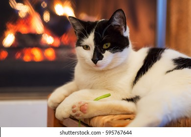 Happy kitty in front of a fireplace