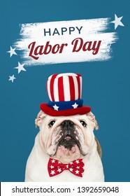 Happy labor day from a cute white English Bulldog puppy