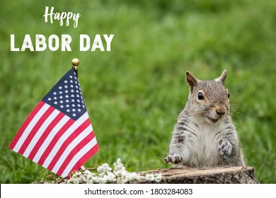 Happy Labor Day text with smiling patriotic Gray Squirrel and American Flag green grass