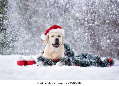 happy labrador dog in santa hat posing outdoors in snow