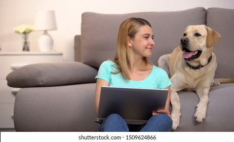Happy labrador retriever female owner buying dog food online using laptop pc
