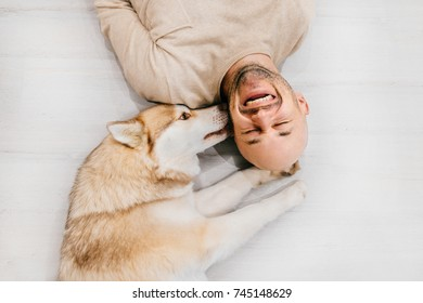 Happy laughing adult man lying on wooden floor. Bald male emotions. Guy with his siberian husky dog at home. Love animals. Domestic mammal puppy licking owner ear. Funny expressive leisure time
