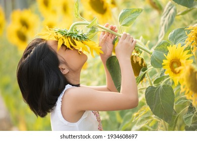 happy little asian girl having fun among blooming sunflowers under the gentle rays of the sun. child and sunflower, summer, nature and fun. summer holiday. little girl smelling a sunflower.