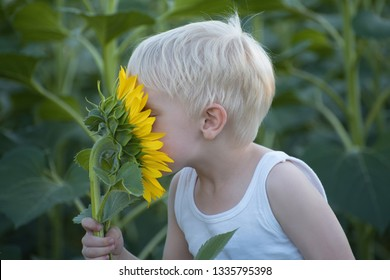 Happy little blond boy sniffing a sunflower flower on a green field. Close-up