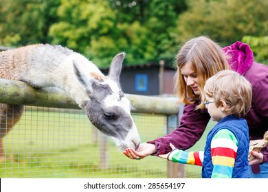 Happy little blond kid boy and his mother feeding big lama on an animal farm. Warm summer day. Active family leisure with children outdoors.