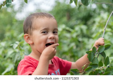 A happy little boy eats berries from a bush