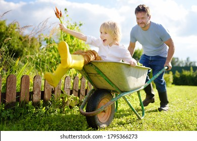 Happy little boy having fun in a wheelbarrow pushing by dad in domestic garden on warm sunny day. Active outdoors games for family with kids in the backyard during harvest time