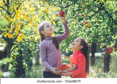 Happy little children picking apples in the garden