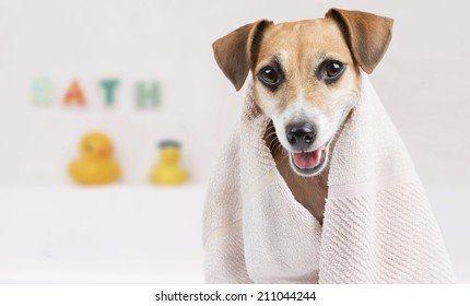 Happy little dog in the bathroom after a bath wrapped in a towel