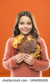 Happy little girl with maple leaves. Small child hold autumn leaves. Collecting leaves. Cute happy smiling kid playing with leaves. Botany concept. Natural treasures. Color pigment. Changes in nature.