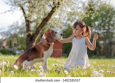 Happy little girl playing with dog in garden. Four-year-old girl on a Sunny summer day with a Beagle on a lawn with daisies.