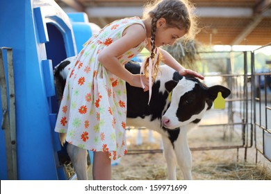 Happy little girlcaresses small calf at cow farm at summer day.