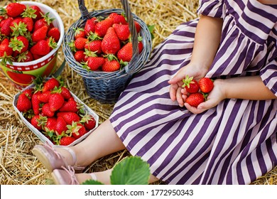 Happy little toddler girl picking and eating strawberries on organic berry farm in summer, on warm sunny day. Child having fun with helping. Kid on strawberry plantation field, ripe red berries.