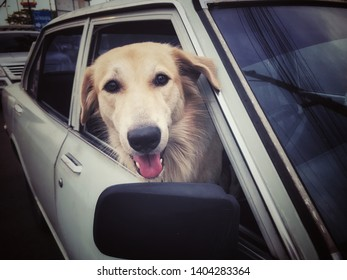 Happy looking dog guarding his owner's car put his head out of the car's window parking on the side road in the afternoon