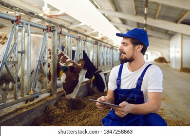 Happy male farm worker with tablet computer sitting near stables with feeding cows in big barn. Dairy and meat industry, smart farming, agro technology in farming business concepts. Copy space