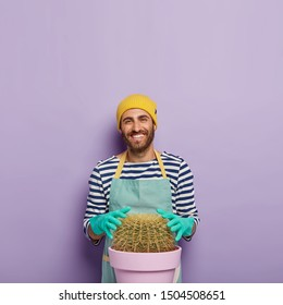 Happy man grows very big cactus at home, touches succulent plant, wears rubber gloves, uniform, being interested in botany, isolated over purple background, blank space above. Gardening concept