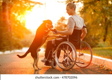Happy man with his dog at sunset. A guy in a wheelchair.