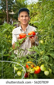 Happy man in his tomato garden.