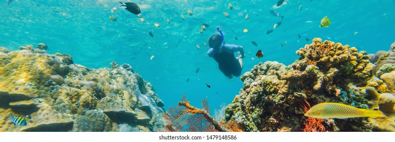 Happy man in snorkeling mask dive underwater with tropical fishes in coral reef sea pool. Travel lifestyle, water sport outdoor adventure, swimming lessons on summer beach holiday. Aerial view from