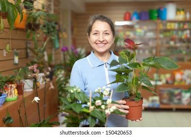 Happy mature woman chooses anthurium in pot at flower shop