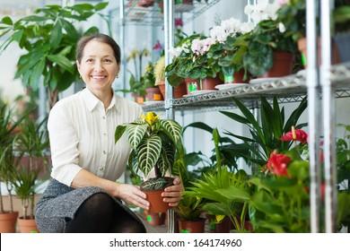 Happy mature woman chooses Aphelandra plant at flower shop