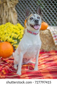 Happy Mixed Breed Dog with Fall Scene
