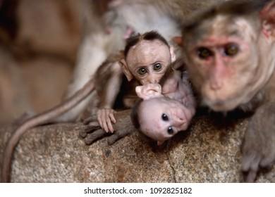 Happy monkey family