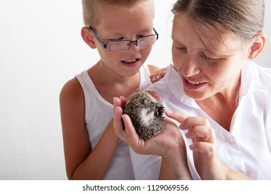 happy mother girl examines young hedgehog and shows it to children. Hands with mammal. close-up. concept of healthy lifestyle in nature, the love of peace, respect for nature, motherhood in farm