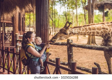Happy mother and son watching and feeding giraffe in zoo. Happy family having fun with animals safari park on warm summer day.
