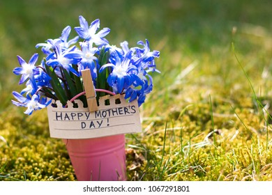 Happy Mother's Day concept. Bouquet of blue spring flowers with a nice bee in a pink decorative bucket in a green grass.