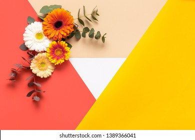 Happy Mother's Day, Women's Day, Valentine's Day or Birthday Color Background. Coral flat lay greeting card template with beautiful gerbera flowers.