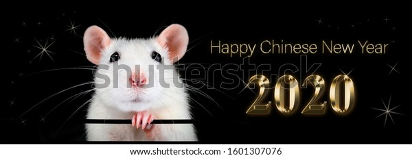 Happy new year 2020. Chinese year of the rat. White rat with black background. Text in gold representing metal, riches, fortune and prosperity.