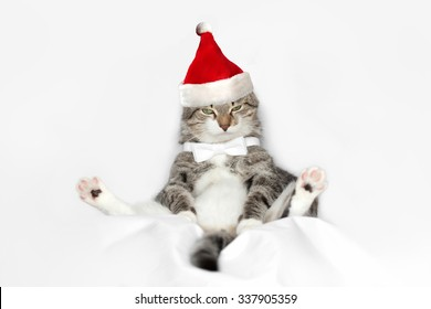 happy new year cat with santa red hat isolated on white background