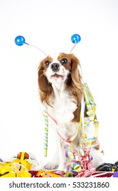 Happy new year! Illustrate your work with king charles spaniel New year dog illustration.  Dog celebrate New year's eve with sylvester trumpet. Cavalier king charles spaniel dog celebrate new year!