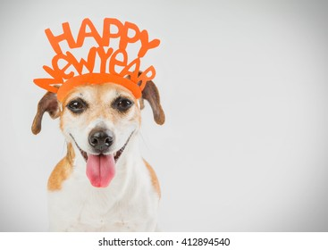 Happy New year party dog card. Horizontal. Grey ( gray ) background orange word on the head.