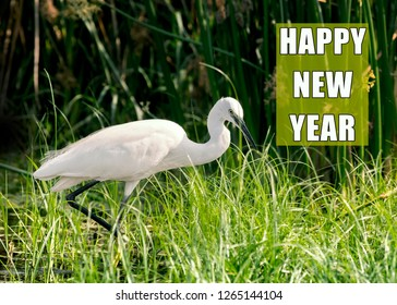 happy new year poster with egret