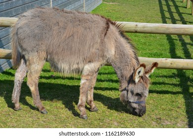 Happy Old Grey Retired Donkey