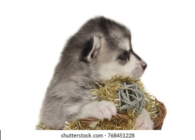 Designer Dog Images, Stock Photos & Vectors | Shutterstock