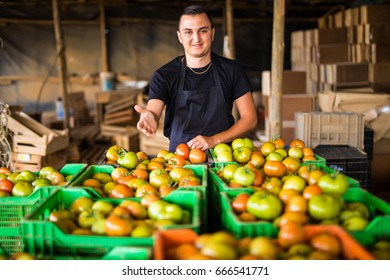 Happy organic farmer over tomatoes boxes in storage before prepare to sale in a greenhouse