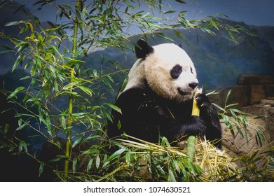 happy panda bear smiling
